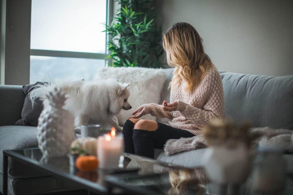 Twój pies lubi odpoczywać na łóżku i kanapie? Zastanawiasz się, jak go tego oduczyć? Zapoznaj się koniecznie z naszymi wskazówkami!